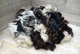 1 kg Lammwolle - Niederländ. Buntes Schaf (Bunt gefleckt)_