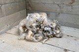 200 g Basiswolle / Füllwolle - pur (Wollweiß)_