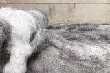 100 g gewaschene Vlieswolle - Nied.Buntes Sch. (Bunt gefleckt)_