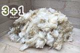 4 kg basisklasse - Holländisches Bauernschaf (Elfenbeinfarbig)_