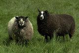 100 g gewaschene Vlieswolle - Basiswolle / Füllwolle (Gemischt)_