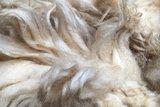 1 kg Lammwolle - Drenter Heideschaf (Elfenbeinfarbig)_