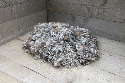 500 g A-Klasse - Wensleydale schaf (Elfenbeinfarbig)