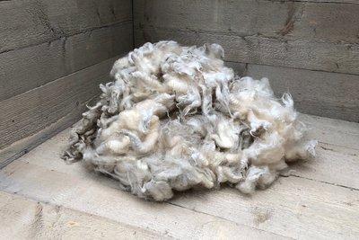 500 g Lammwolle - Friesisches Milchschaf (Elfenbeinfarbig)