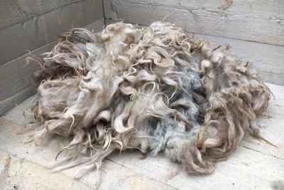 1 kg Lammwolle - Drenter Heideschaf (Meliert)