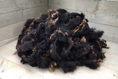 1 kg Lammwolle - Dassenkopf Texelschaf (Dunkel Braungrau)