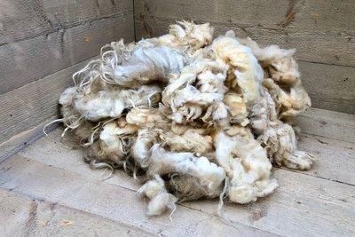 1 kg Basiswolle / Füllwolle - pur (Wollweiß)