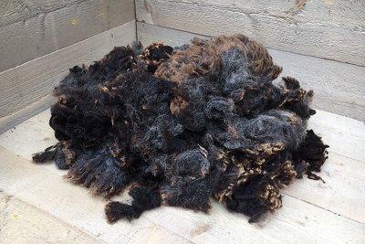 1 kg Lammwolle - Blaue Texelschaf (Dunkelgrau)