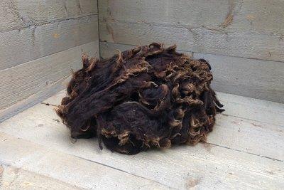 500 g Lammwolle - Zwartbles (Rotbraun)
