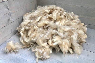 1 kg Lammwol. - Veenkolonisten (Elfenbeinfarbig)