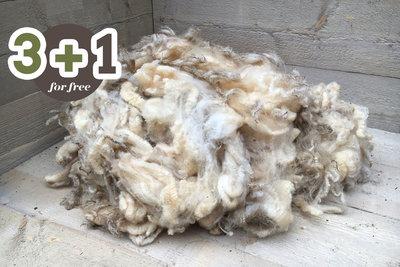 4 kg Lammwolle - Texelschaf (Elfenbeinfarbig)