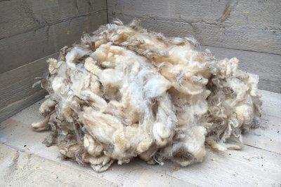 1 kg Lammwolle - Texelschaf (Elfenbeinfarbig)
