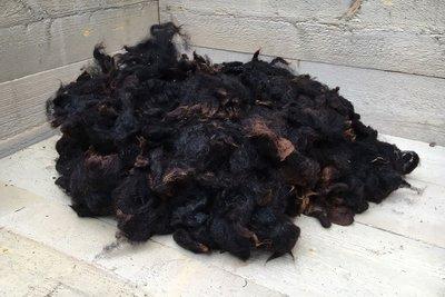 1 kg Lammwolle - Zwartbles (Braunschwarz)